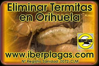 Eliminar termitas en Orihuela