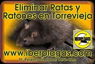 Desratizar en Torrevieja
