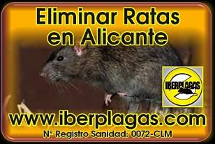 Eliminar ratas en Alicante