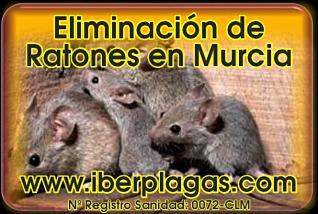 Eliminar ratones en Murcia