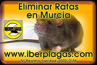 Eliminar ratas en Murcia