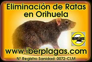 Eliminar ratas en Orihuela