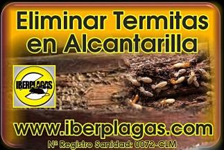 Eliminar termitas en Alcantarilla