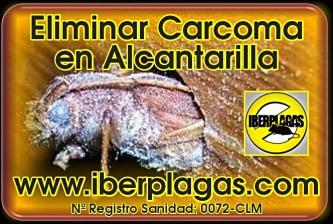Eliminar Carcoma en Alcantarilla