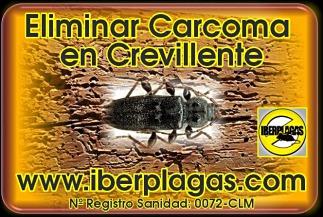 Eliminar Carcoma en Crevillente