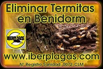 Eliminar termitas en Benidorm