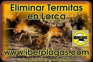 Eliminar termitas en Lorca