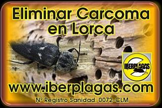 Eliminar Carcoma en Lorca