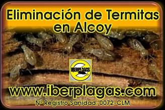 Eliminar termitas en Alcoy