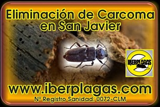 eliminar carcoma en San Javier