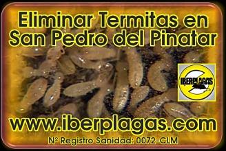 eliminar termitas en San Pedro del Pinatar