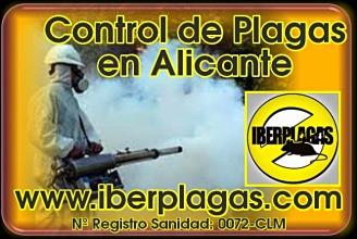 Control de Plagas en Alicante