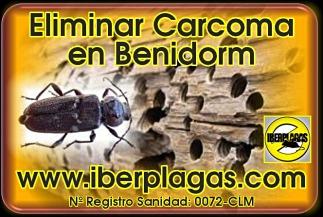 Eliminar Carcoma en Benidorm