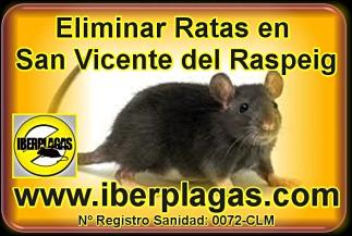 Eliminar Ratas en San Vicente del Raspeig