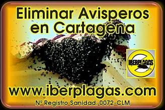 Eliminar Avispas en Cartagena