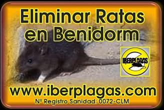 Eliminar ratas en Benidorm