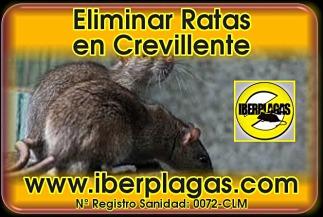 Eliminar Ratas en Crevillente