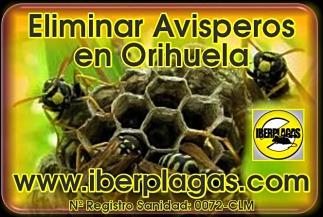Eliminar Avispas en Orihuela