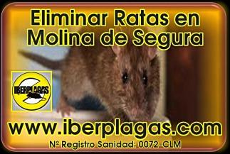 Eliminar ratas en Molina de Segura