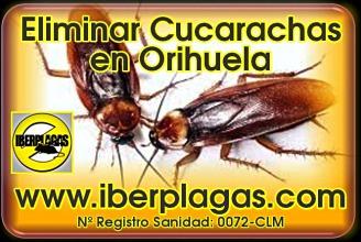 Eliminar cucarachas en Orihuela