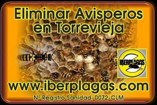 Eliminar Avispas en Torrevieja