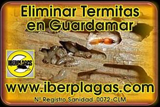 eliminar termitas en Guardamar