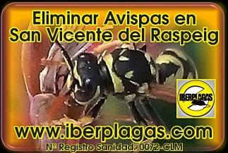 Eliminar avispas en San Vicente del Raspeig