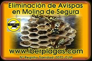 Eliminar Avispas en Molina de Segura