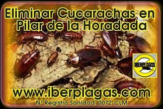 Eliminar Cucarachas en Pilar de la Horadada
