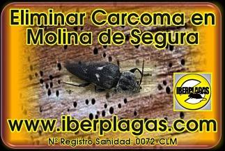 Eliminar Carcoma en Molina de Segura