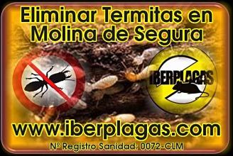 Eliminar termitas en Molina de Segura