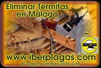 Eliminar termitas en Málaga