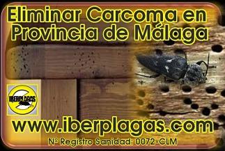 Eliminar Carcoma en Málaga
