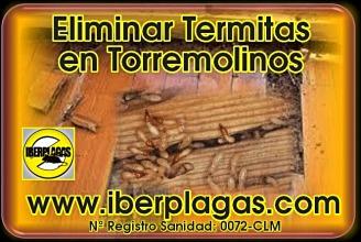 Eliminar termitas en Torremolinos