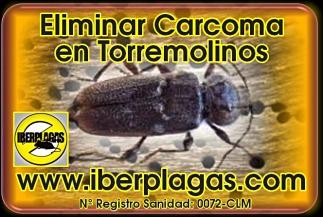 Eliminar Carcoma en Torremolinos