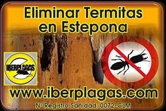 Eliminar termitas en Estepona