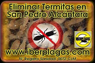 Eliminar Termitas en San Pedro Alcántara