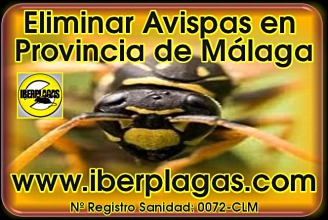 Eliminar avispas en Málaga