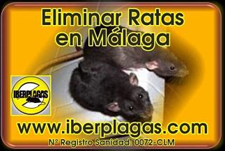 Eliminar ratas en Málaga