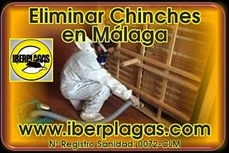 eliminar chinches de cama en Málaga
