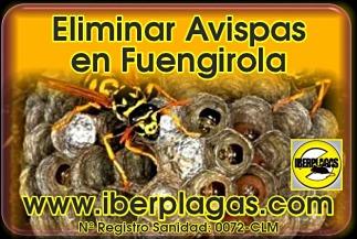 Eliminar avispas en Fuengirola