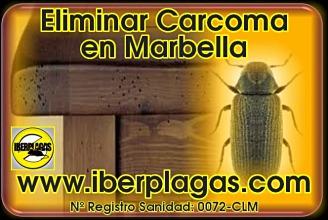 Eliminar carcoma en Marbella