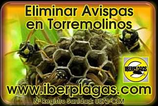 Eliminar avispas en Torremolinos