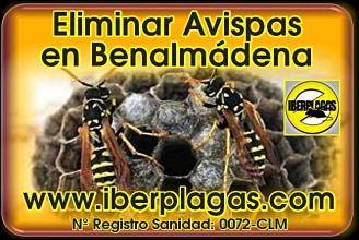 Eliminar avispas en Benalmádena