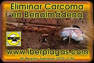Eliminar Carcoma en Benalmádena