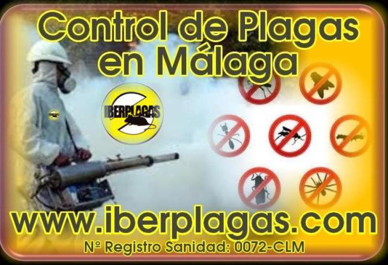 Control de plagas en Málaga