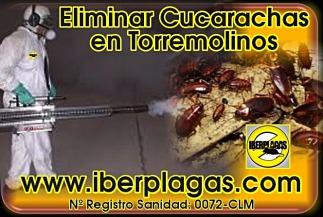 Eliminar cucarachas en Torremolinos