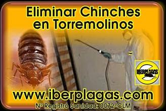 eliminar chinches de cama en Torremolinos