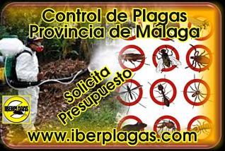 Presupuesto control de plagas en Málaga