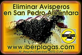 Eliminar avisperos en San Pedro Alcántara